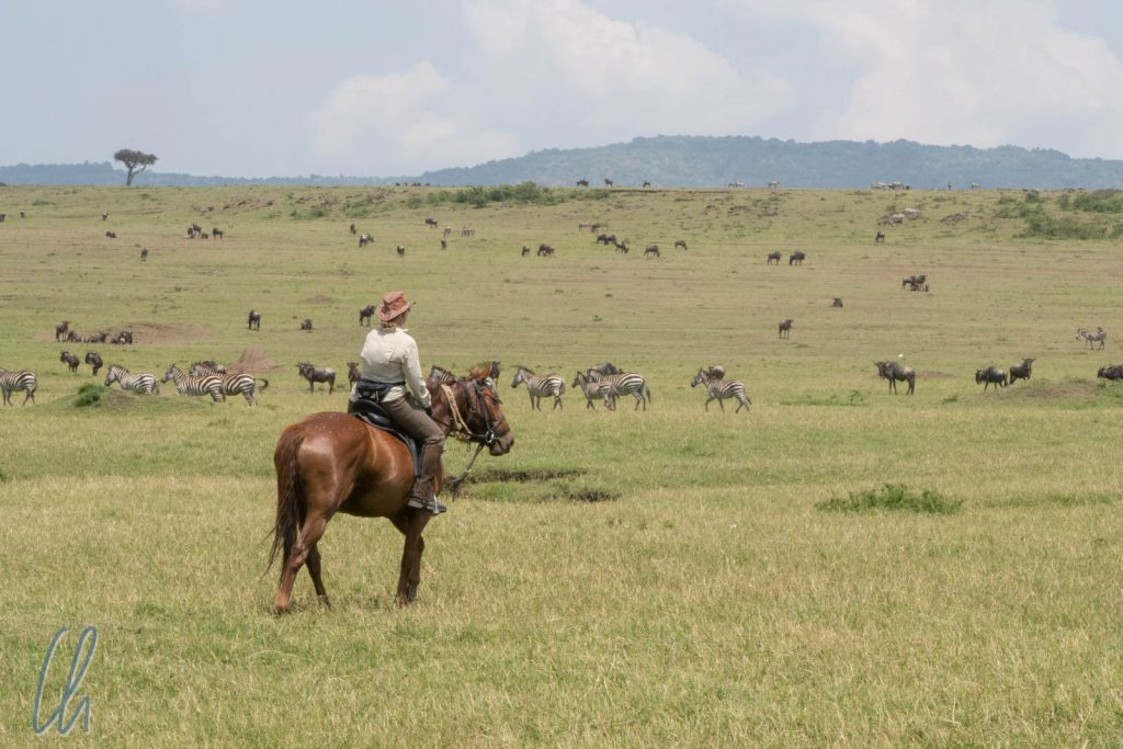 Mona und Alfredo beobachteten die Herden in der Masai Mara.