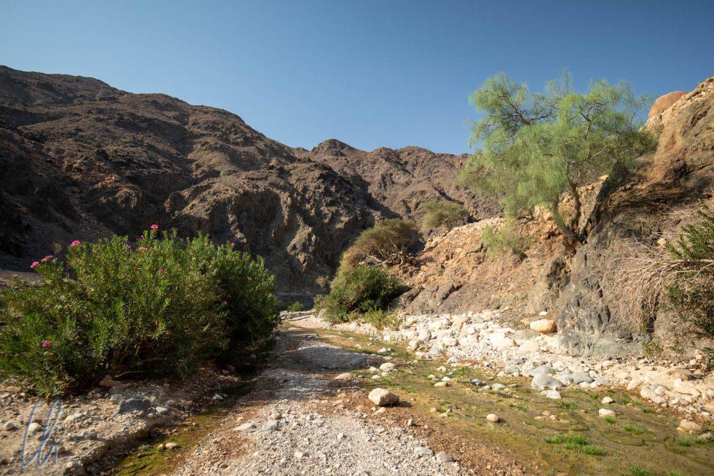 Im Wadi Ghwayr erblüht die Wüste.