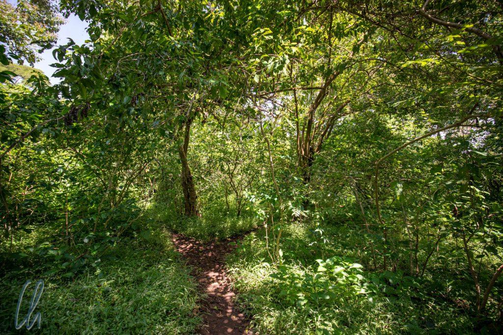 Die schmalen Wege auf der Zeghie Halbinsel schlängelten sich durch dichten Wald.