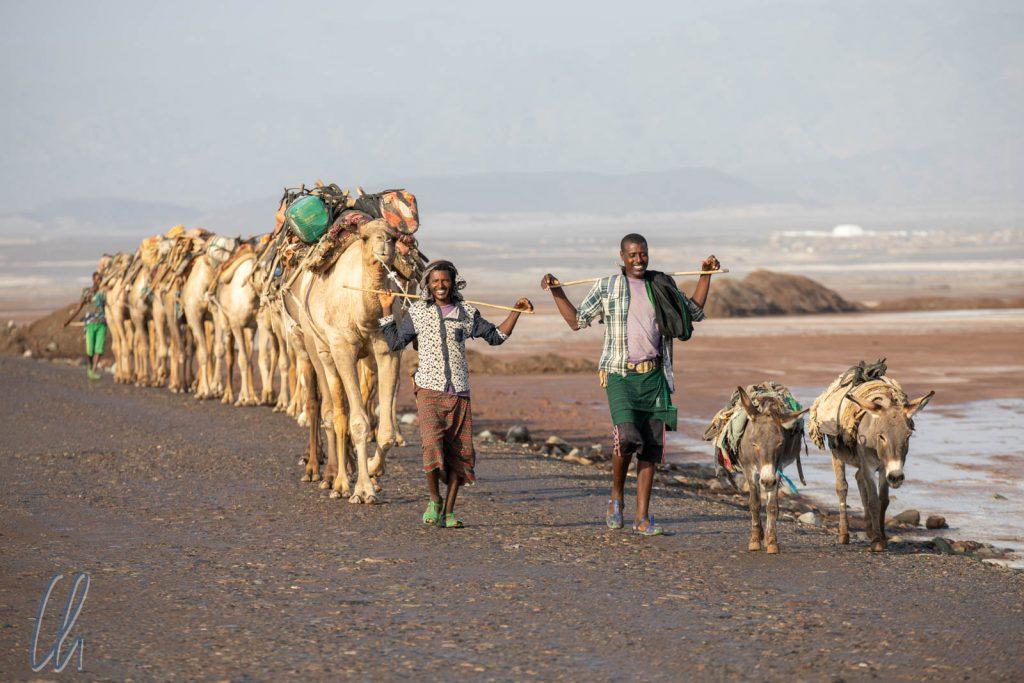 Die Kamelkarawane war in der Morgenfrische bei 34 Grad unterwegs zum Ort des Salzabbaus.