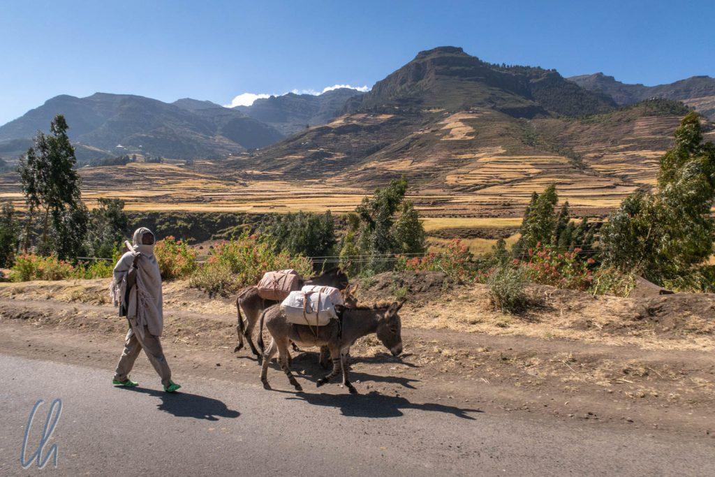 Ein Bauer mit seinen Eseln