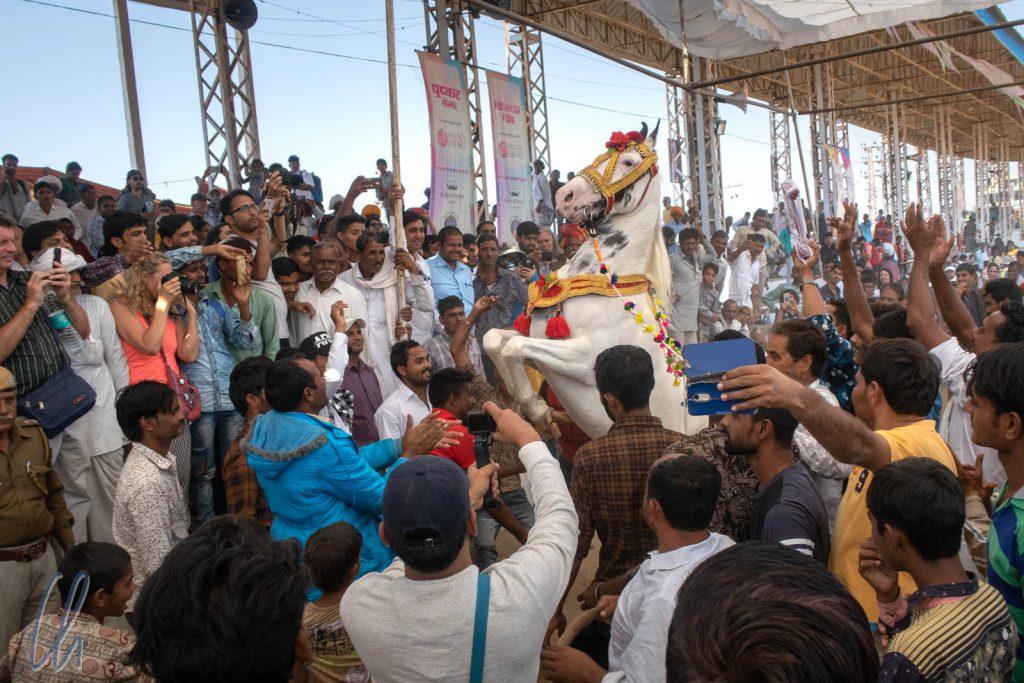 Das Pferd stieg in der sich immer dichter herandrängenden Menschenmenge.