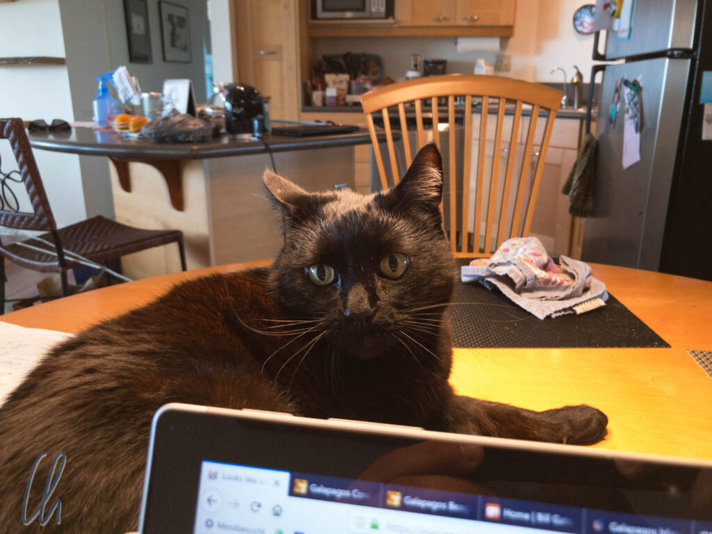 Bei Mary-Alice in Kalifornien legten wir eine Reisepause ein. Ihre Katze Vindaloo unterstützte uns bei der Reiseplanung.