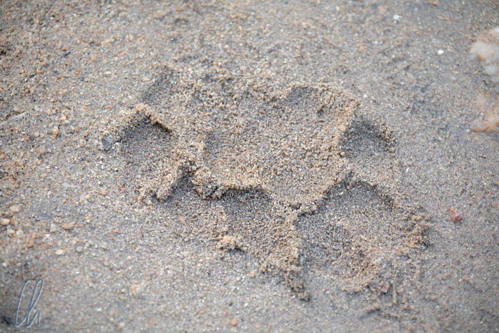 """Ein frischer Tigertatzenabdruck (""""Pugmark"""")"""